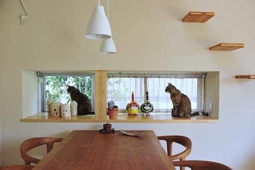 500出窓猫.jpg
