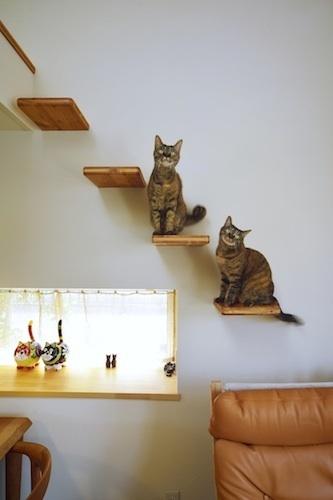 500猫階段の猫.jpg