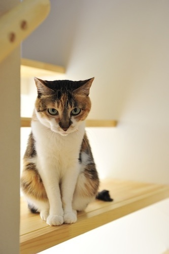 500階段猫.jpg
