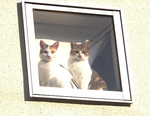 窓・外から猫2匹.jpg