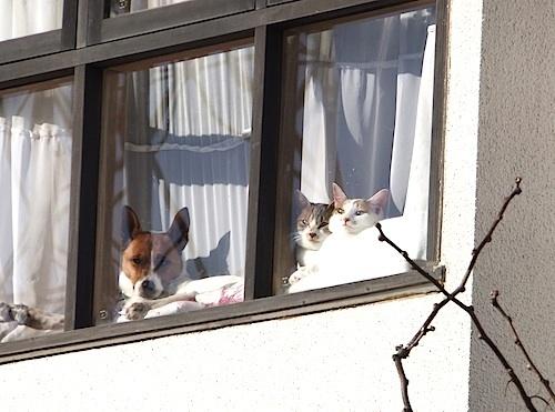 窓・外から3匹.jpg